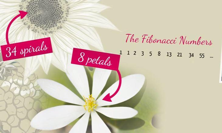 Keajaiban Susunan Angka Fibonacci. Hasilnya Mengejutkan!
